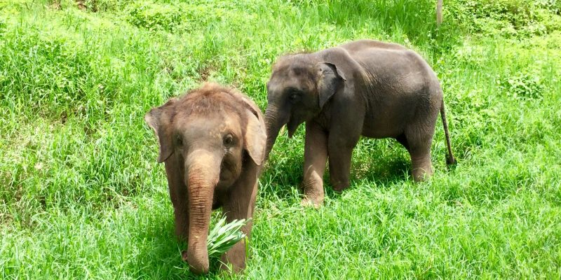 ¿Paseos en elefante? No con nosotros