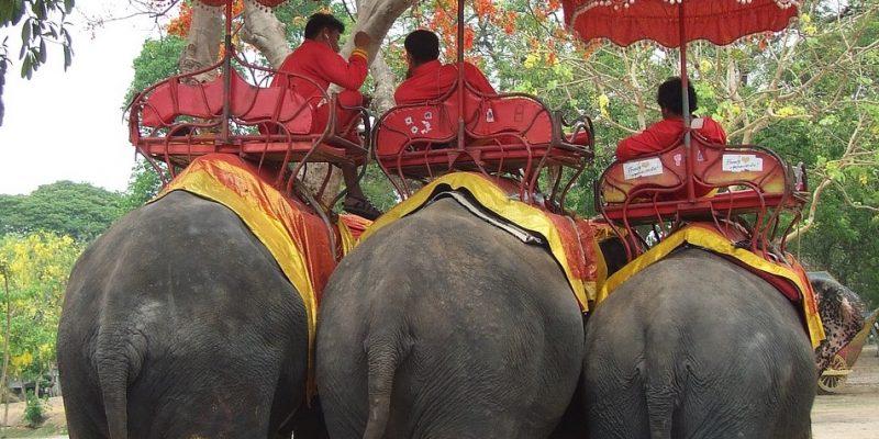 ¿Por qué los paseos en elefante son maltrato?